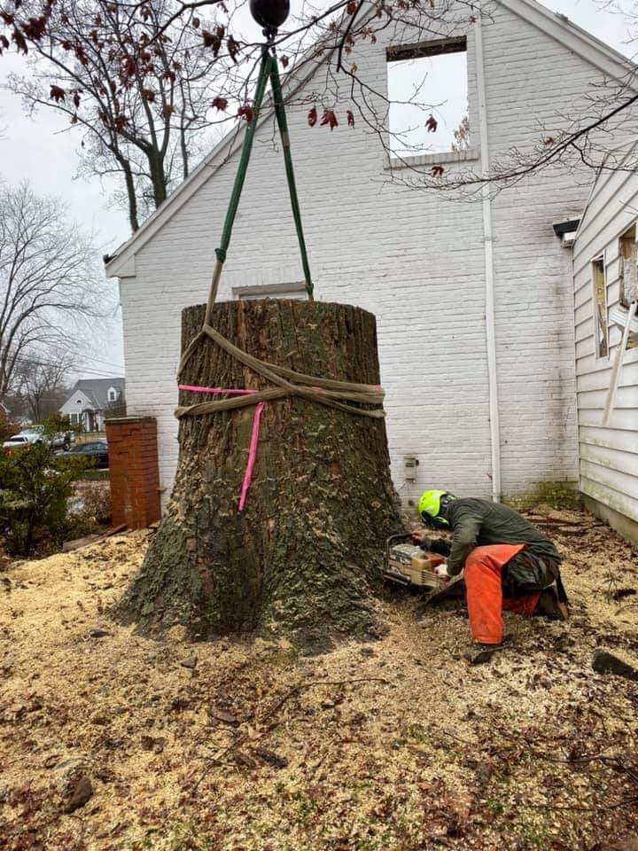 Tree Removal Services In Arlington