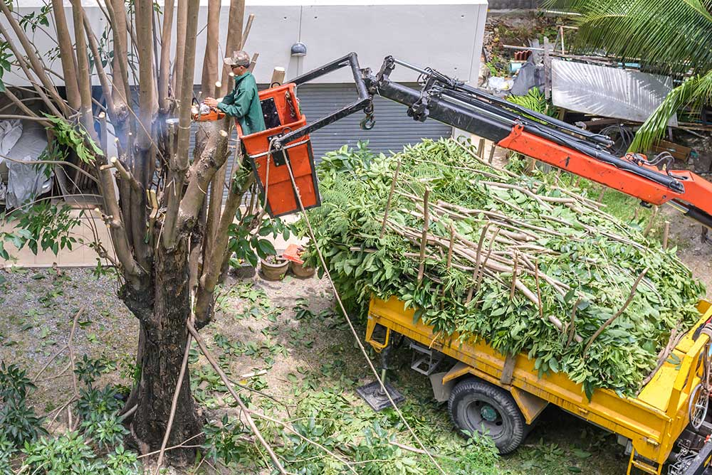 Tree Trimming Services in Fort Worth